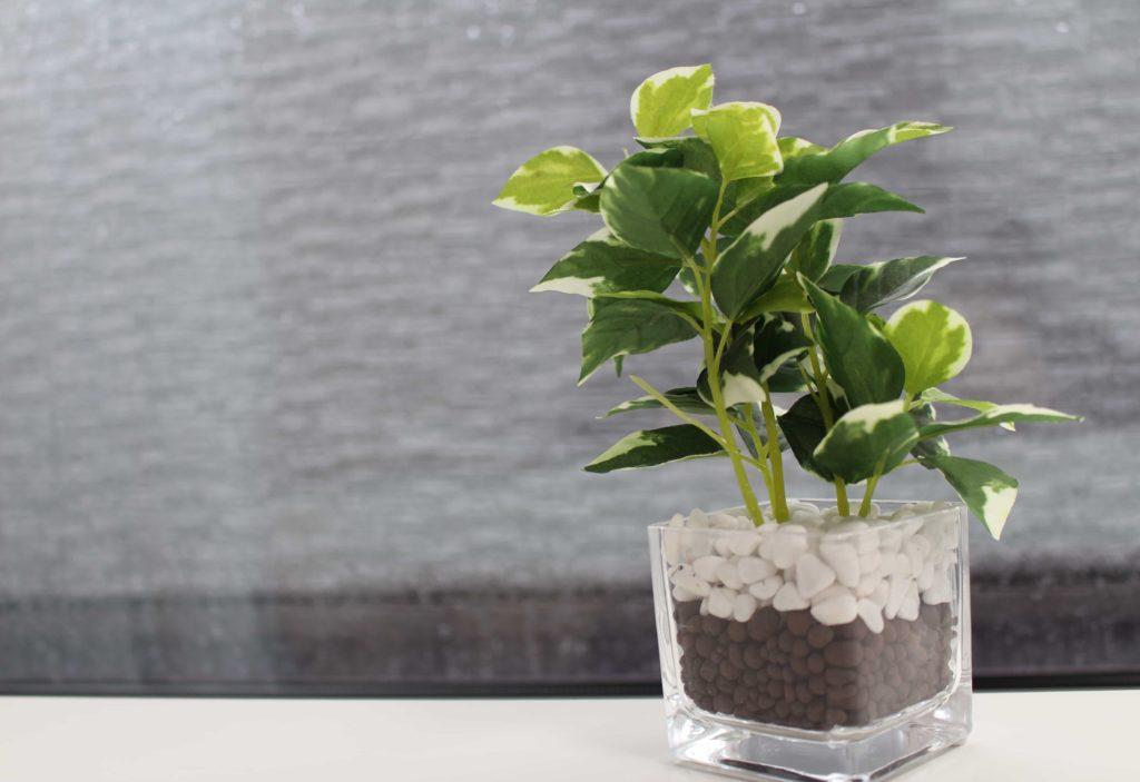 ニトリ ガラスポット フェイクグリーン 観葉植物 ペペロミア