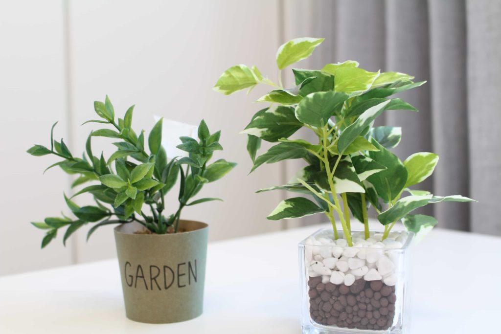 ニトリ フェイクグリーン 観葉植物 ガラスポット ペペロミア ダイソー DAISO 比較