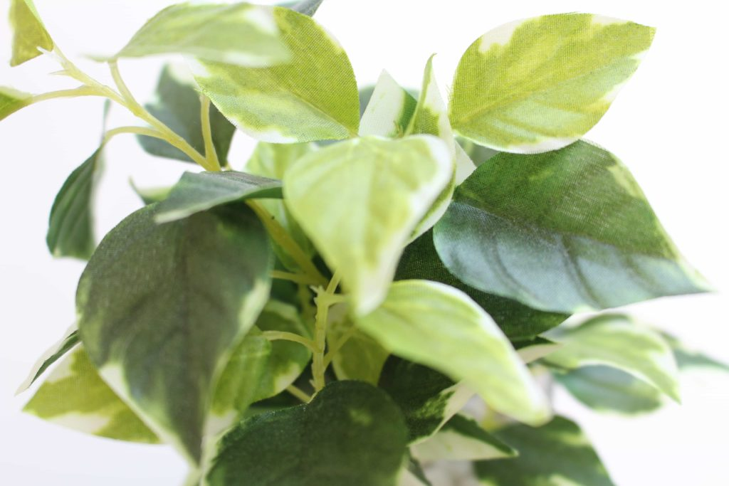 ニトリ フェイクグリーン 観葉植物 ガラスポット ペペロミア